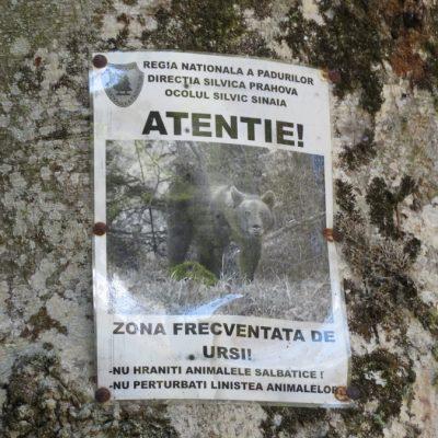 Uwaga niedźwiedź!